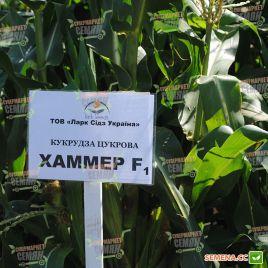 Хаммер F1 семена кукурузы суперсладкой Sh2 поздней 85 дн. 24-26см 16-18р. (Lark Seeds)