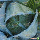 Циклон F1 семена капусты б/к средней 100 дн. 2-4 кг окр. (Bejo)