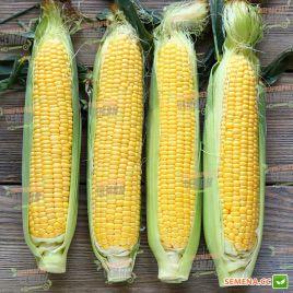 Агнес F1 семена кукурузы суперсладкой (Semo)