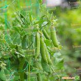 Авола (Цетрис) семена гороха овощного раннего 50-55 дн. (Semo)