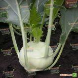 Дворана семена капусты кольраби (Semo)