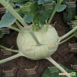 Моравия семена капусты кольраби ранней (Semo)
