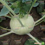 Моравия семена капусты кольраби ранней 50-60 дн. зел. (Semo)
