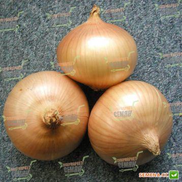 Августа семена лука репчатого озимого раннего 260-280 дн. окр. 110-120 гр. (Semo) НЕТ ТОВАРА