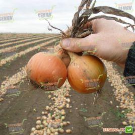 Дагмар семена лука репчатого среднего 140-160гр (Semo)
