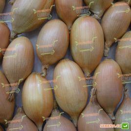Элиста F1 семена лука репчатого раннего (Semo)