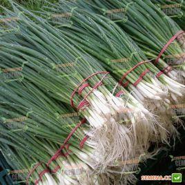 Герда семена лука на перо среднераннего 65-70дн. (Semo)