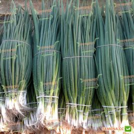 Кай семена лука на перо раннего темно-зеленого (Semo)