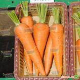 СВ 3118 ДЧ F1 (SV 3118 DH F1) (1,8-2,0мм) семена моркови Шантане ранней 85-90 дн (Seminis)