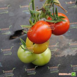 Ариена F1 (CRX 75251 F1) семена томата индет. среднеранн. 150 гр. (Cora Seeds)