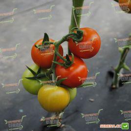 Ариена F1 (CRX 75251 F1) семена томата индет. среднеранн. 150 гр. (Cora Seeds) НЕТ ТОВАРА