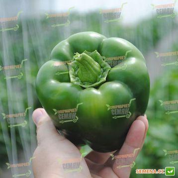Аристотель F1 (Aristotel F1) семена перца сладкого тип Блочный среднего 70-75 дн. корот.куб. 13х11см 2-х камер. 9-10 мм зел./кра