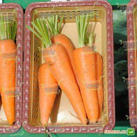 Виктория F1 семена моркови Шантане (Seminis)