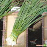 Грин Баннер семена лука на перо (Seminis)