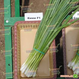Кими семена лука на перо раннего (Cora Seeds)