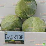 Блоктор F1 семена капусты б/к поздней 130-135 дн. 2,5-3 кг окр. (Syngenta)