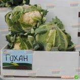 Гохан F1 семена капусты цветной средней 80-85 дн. 2-3 кг бел. (Syngenta)