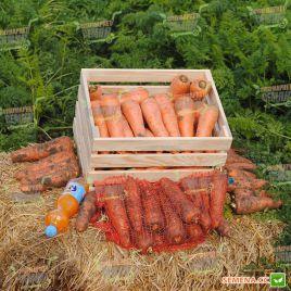 Мирафлорес F1 семена моркови Нантес (Clause)