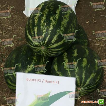 Бонта F1 (Bonta F1) семена арбуза тип кр.св. раннего 60-65 дн. 7-8 кг окр. (Seminis)