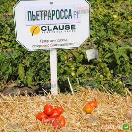 Пьетра Росса F1 семена томата дет. среднераннего 115-120 дн. слив. 70-80г (Clause)