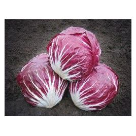 Индиго семена салатного цикория кочанного фиолетового 68 дн. (Bejo)