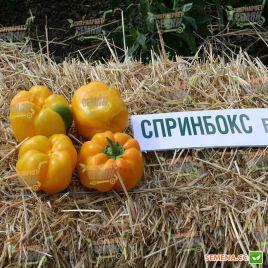 Казантип F1 (Спрингбокс F1) семена перца сладкого раннего 70-75 дн. 240-260 г зел./желт. кубов. (Clause)