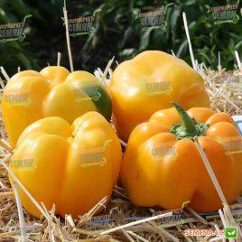 Казантип F1 (Спрингбокс F1) семена перца сладкого тип Блочный раннего 70-75 дн. корот.куб. 240-260г 10х8см 4-х камер. зел./желт.