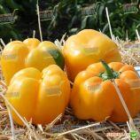 Казантип F1 (Спрингбокс F1) семена перца сладкого тип Блочный среднераннего 70-75 дн. корот.куб. 240-260 гр. 10х8 см 4-х камер.
