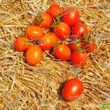 Стелларед семена томата дет. (Clause)