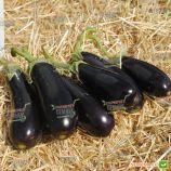 Фабина F1 семена баклажана (Clause)