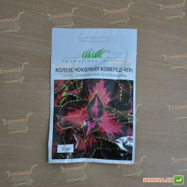Сан Чоколейт коверед черри семена колеуса (Pan American)