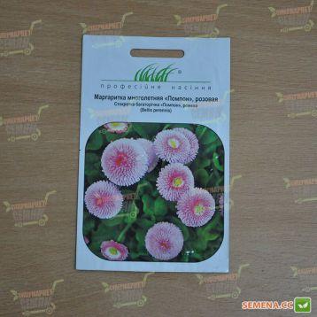 Маргаритка Помпон розовая