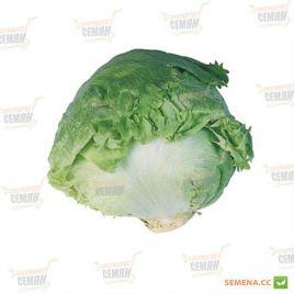 Авирам семена салата тип Айсберг (Hazera)