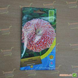 Цинния георгиновидная розовая семена (Moravoseed)