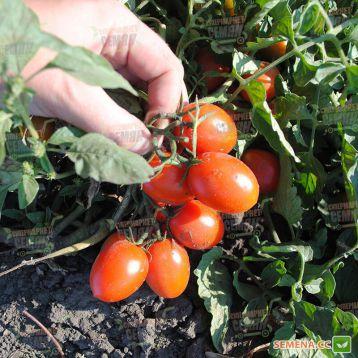 6Пунто7 F1 (6Punto7 F1) семена томата дет. черри ультрараннего слив. 18-22 гр. (Seminis) НЕТ ТОВАРА