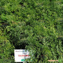 Талисман семена моркови Шантане среднепоздней 125-130 дн (Moravoseed)