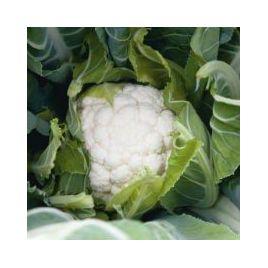Овиедо F1 семена капусты цветной ранней 69дн 0,9-1,5кг бел. (Bejo)