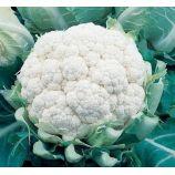 Балбоа F1 семена капусты цветной (Bejo)