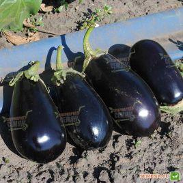 Мирвал F1 семена баклажана тип Алмаз раннего 55-57 дн. 400 гр. 20 см (Vilmorin) НЕТ СЕМЯН