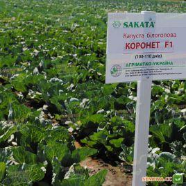 Коронет (TRC-2) F1 семена капусты б/к среднепоздней 100-110 дн. 3-4 кг (Sakata/Sakura)
