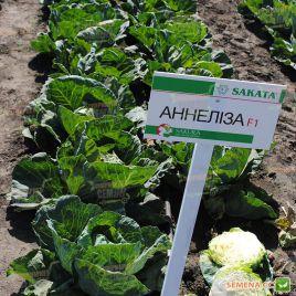 Аннелиза F1 семена капусты б/к ранней 65-70 дн. 2-3 кг (Sakata/Sakura)