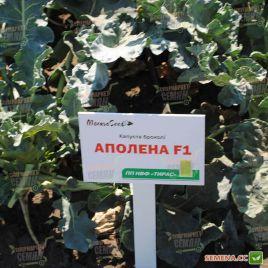 Аполена F1 семена капусты брокколи средней 75-85 дн. 1кг (Moravoseed)