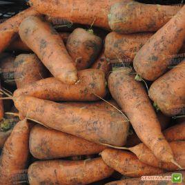 Каскад F1 (2,0-2,2мм) семена моркови Шантане ранней 95-120 дн. (Bejo)
