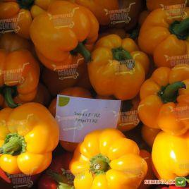 Иланга F1 семена перца сладкого тип Блочный среднего корот.куб. 200-250гр. 10х9см 4-х камер. 7-8мм зел./желт. (Rijk Zwaan)