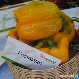 Джерардо F1 (Герардо F1) семена перца сладкого тип Блочный раннего 60-62 дн. корот.куб. 220-260гр. зел./желт. (Hazera)