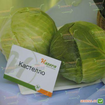 Кастелло F1 семена капусты б/к среднеранней (калибр.) (Hazera)