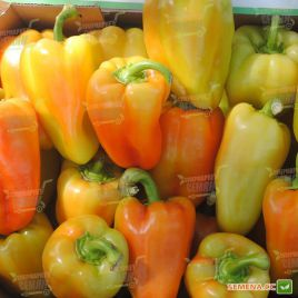 Амулет F1 семена перца сладкого тип Венгерский раннего 50-60 дн. конич. 100-150 гр. 2-3 камер. 5-7мм зел./красн. (Lucky Seed)