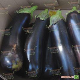 Антрацит F1 семена баклажана (Lucky Seed )