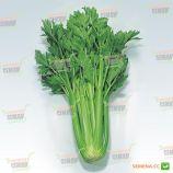 Дарклет F1 семена сельдерея черешкового дражированные (прайм.) (Takii Seeds)