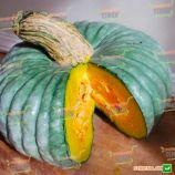 Марина ди Кьожжа семена тыквы мускатной (Hortus)